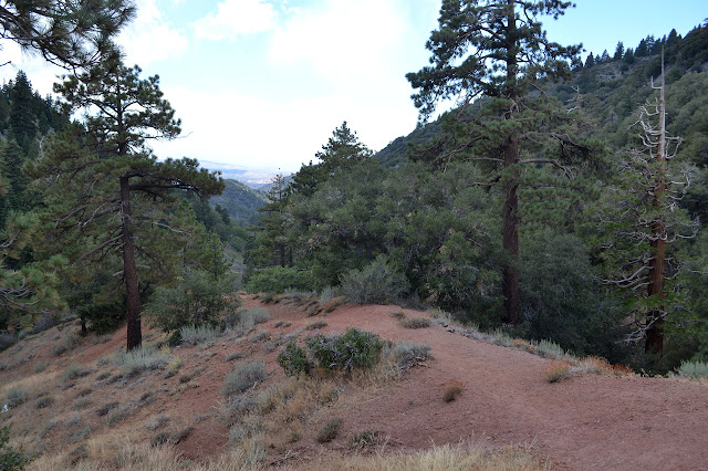 trail through Jeffery pines