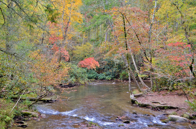 Foliage on Abrams Creek