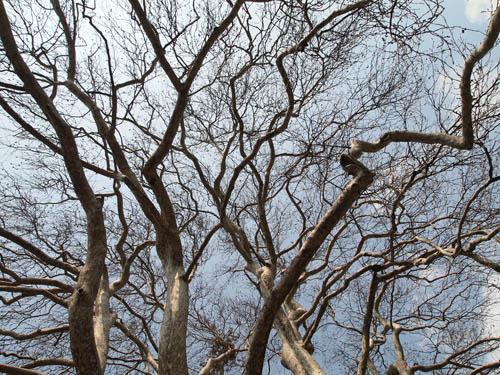 trek-shamantree6.jpg