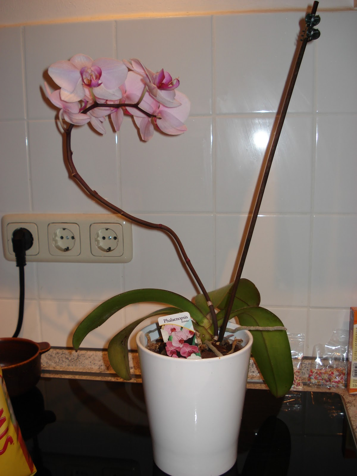 mellis testecke orchideen sind umgetopft. Black Bedroom Furniture Sets. Home Design Ideas