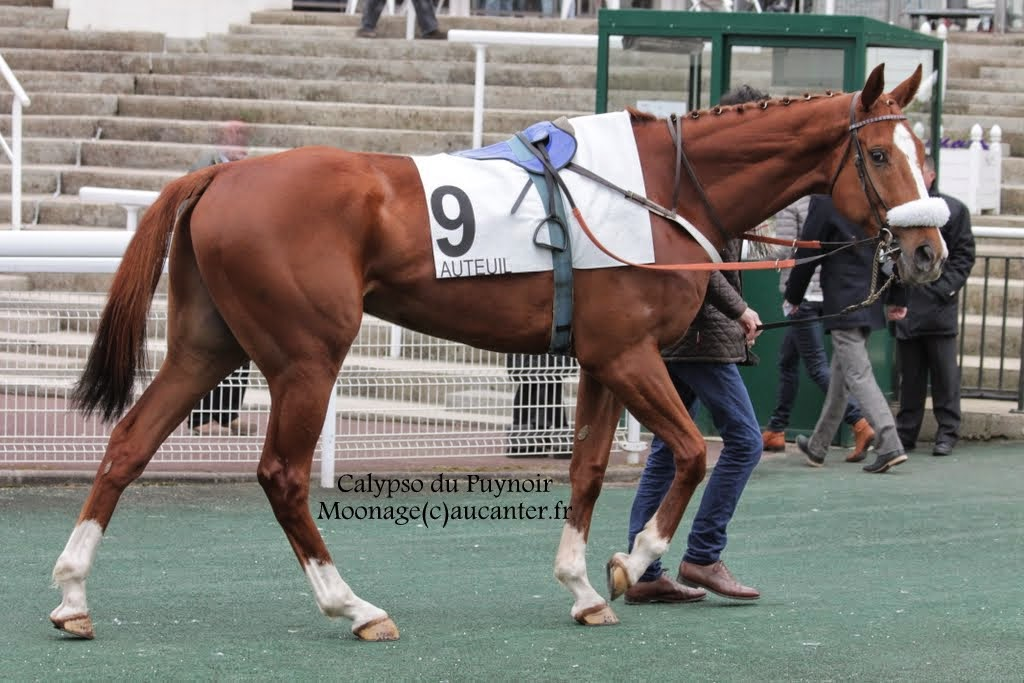 Photos Auteuil 14-03-2015 IMG_7270