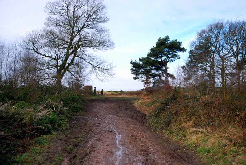 Sandstone Trail – That's How The Light Gets In