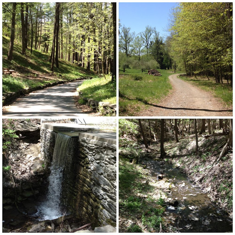 Rambling through Roosevelt Trails