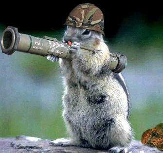 Download free hd wallpapers and photos funny squirrel - Funny squirrel backgrounds ...