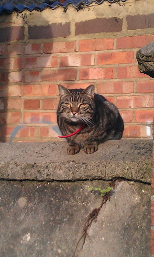 cat at Gambole Road