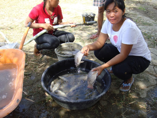 Backyard Fish Pond In The Philippines : have lived in the philippines land philippines engineering