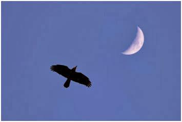 роисхождение названия «ворон» вызывает особенный интерес в связи с совпадением греческих обозначений птицы и неба – орнис и оуранос