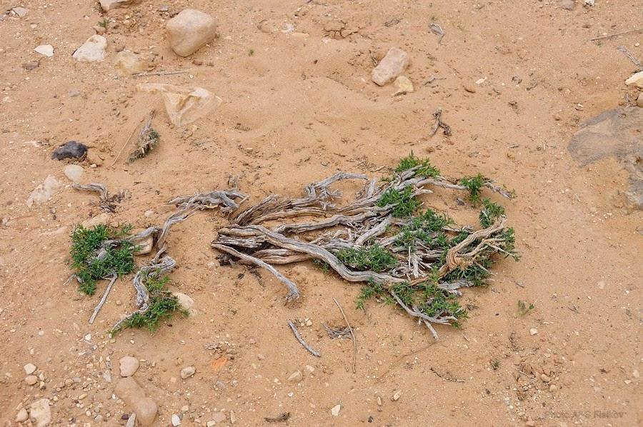 Не легко выжить в пустыне Негев. Экскурсия гида Светланы Фиалковой.
