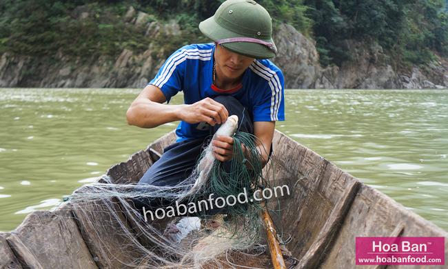 thả lưới bắt cá sông Đà