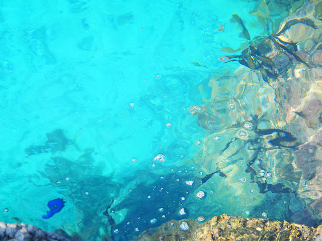 青い魚影が