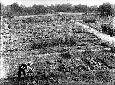 Jardin ouvrier au début du XXème siècle