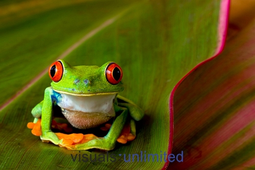 Contempt Cliparts together with Moldes De Pajaros CEXGKaybL also Sapin02 furthermore Cute Colorful Tree Frogs together with Love Buffet. on christmas tree outline