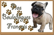 Nos bouledogues français