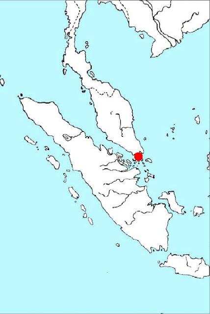 Криптокорина Букит Тима (Cryptocoryne × timahensis)