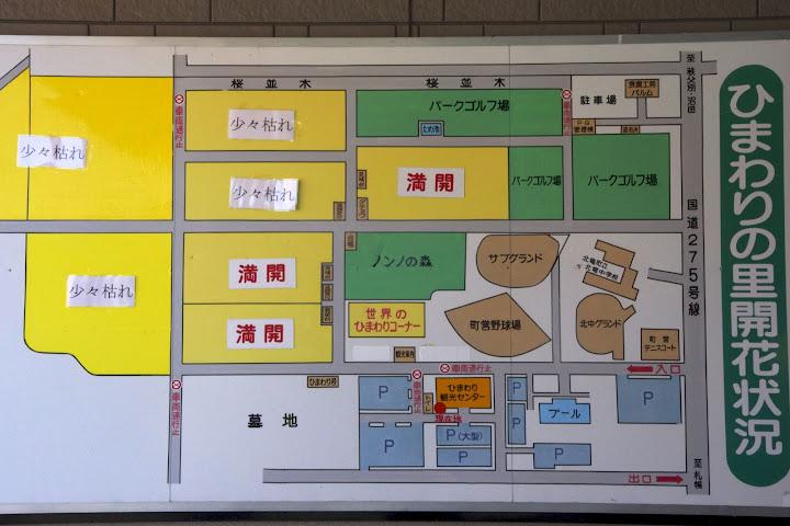 写真:ひまわりの里開花状況 2012年8月22日(水)09:00