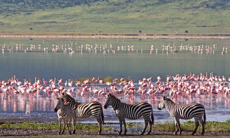 flamingos in shallow pools of water, Tanzania