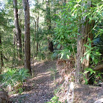 South side of the ridge in Palm Grove NR (370015)
