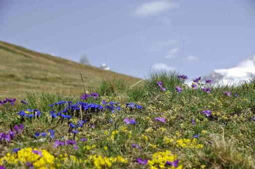 Le printemps sur le plateau d'Emparis