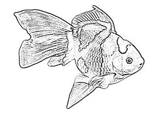 Gold Fish Sketch