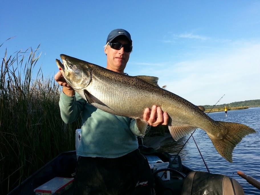 King Salmon Fishing Guide Trips Michigan
