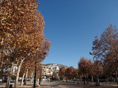 Still autumn here