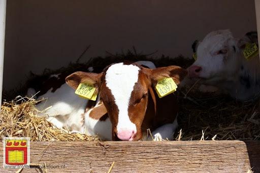 open boerderijdag Vierlingsbeek 28-05-2012 (4).JPG