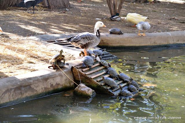 Птицы и черепахи живут вместе