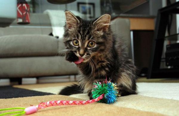 expressive-kittens