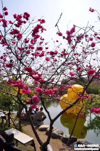 芬園花卉生產休憩園區 - 櫻花盛開