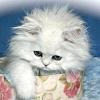Cat Tubulov
