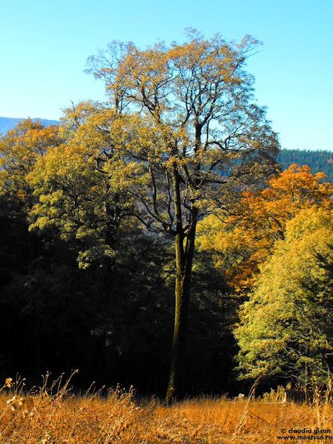 copacul sau padurea