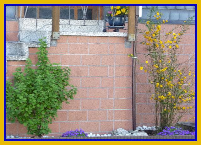 1 jungpflanze buche baum busch hecke strauch. Black Bedroom Furniture Sets. Home Design Ideas