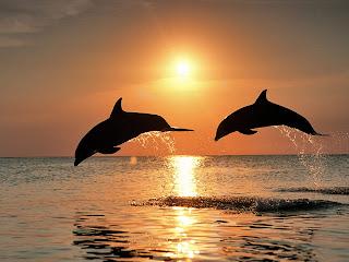 Dolfijnen bij zonsondergang