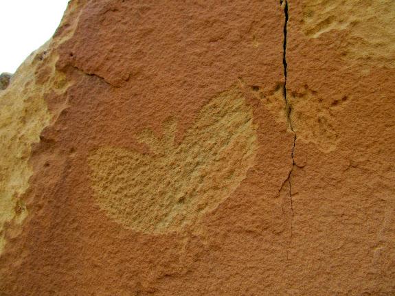Bat(?) petroglyph