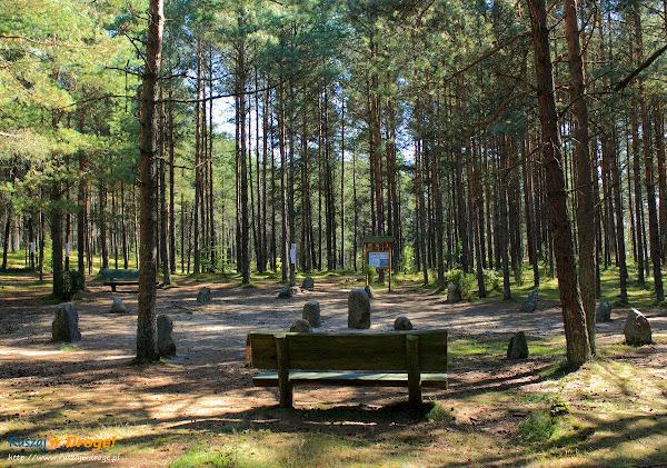 Kamienne Kręgi Gotów w Węsiorach - droga przez las ku kręgom