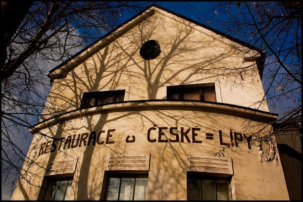 U České lípy