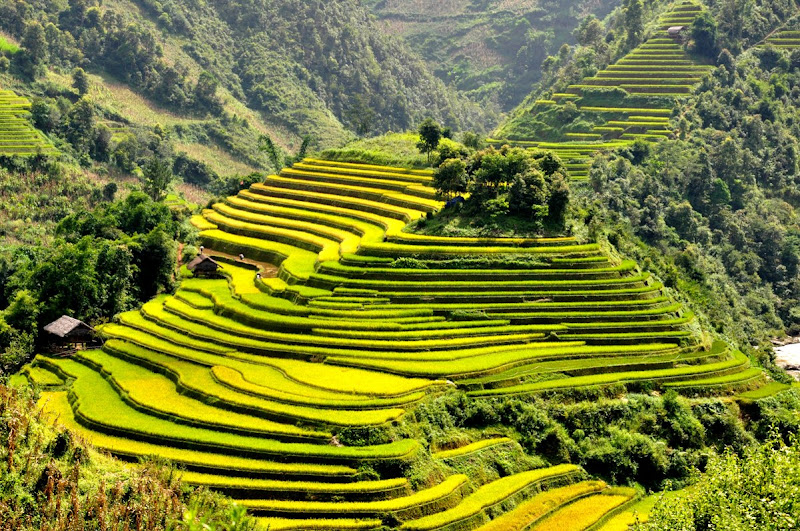 Image result for sa pa terraces vietnam