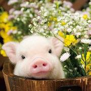 к чему снятся свиньи?