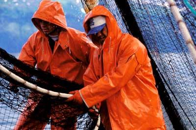 Fishing Blog Commercial Fisherman Jobs