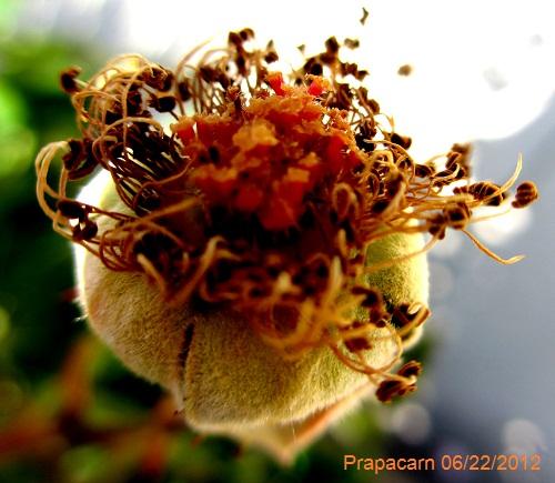 rose089x.jpg