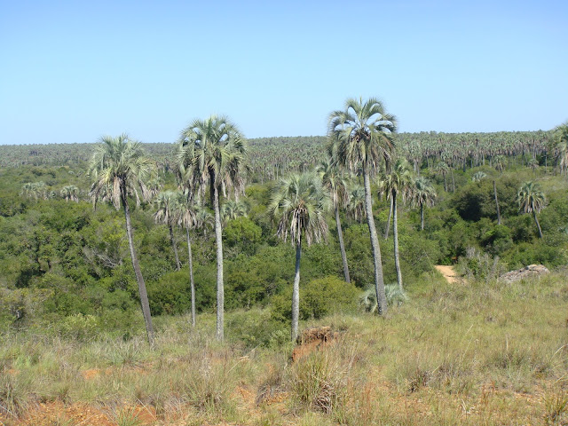 El Palmar, Entre Ríos, Argentina, Elisa N, Blog de Viajes, Lifestyle, Travel