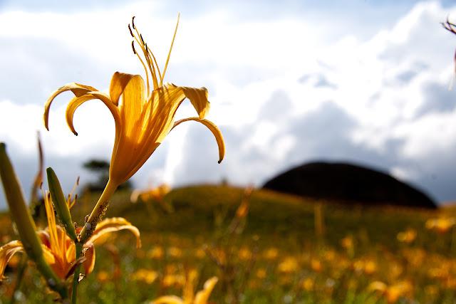 赤科山的最後一抹黃