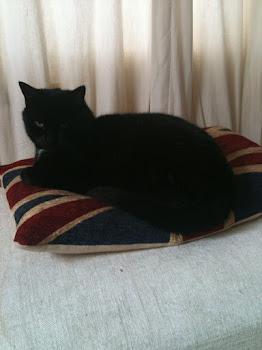 Cat on union jack cushion
