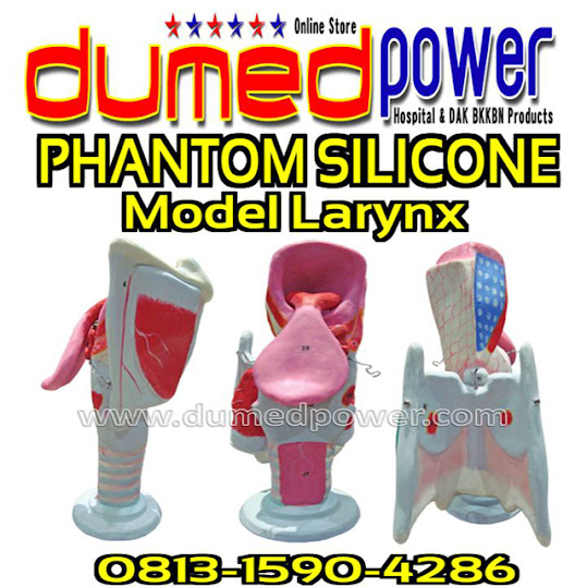 Alat-Peraga-Model-Larynx-Phantom-Silikon-Indonesia