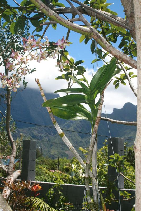 Futur jardin d'orchidées!!! - Page 2 IMG_3715