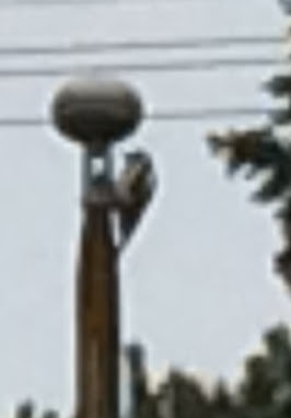 Lipputangon nuppi