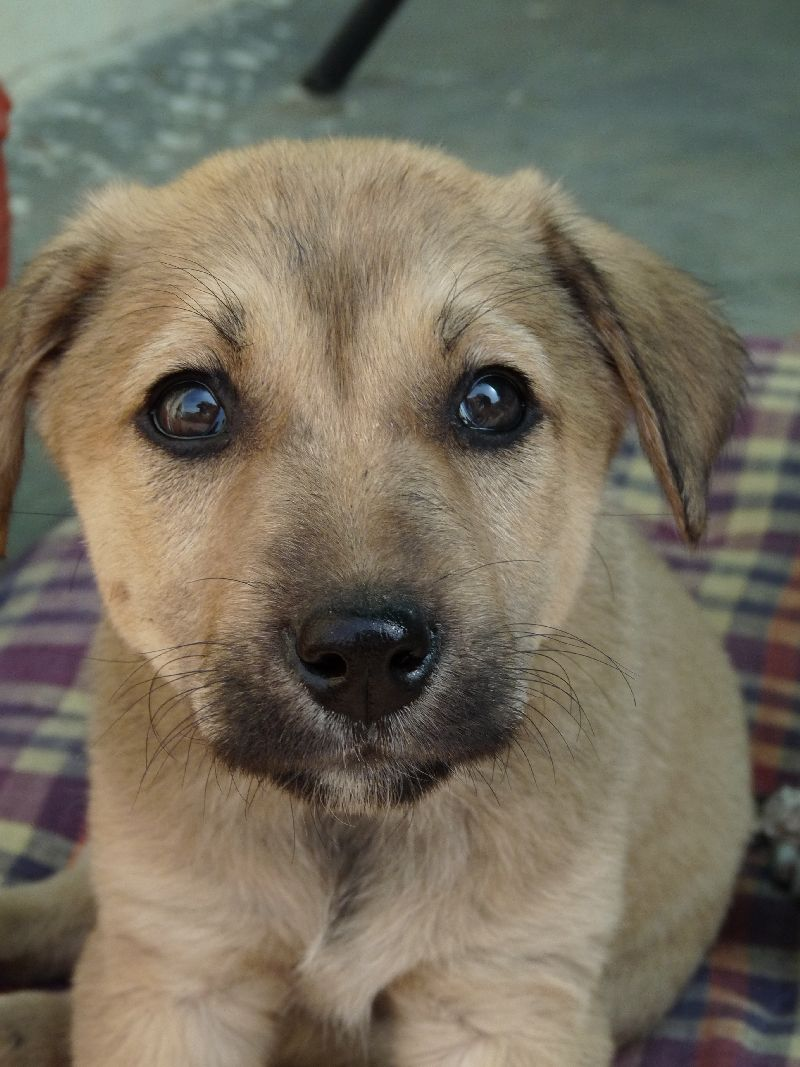 Dog Available For Adoption In Delhi