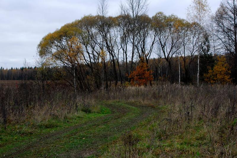 Охота на лис 2011