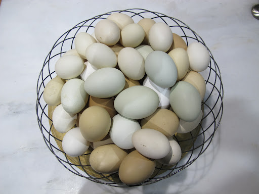 Martha's beautiful eggs