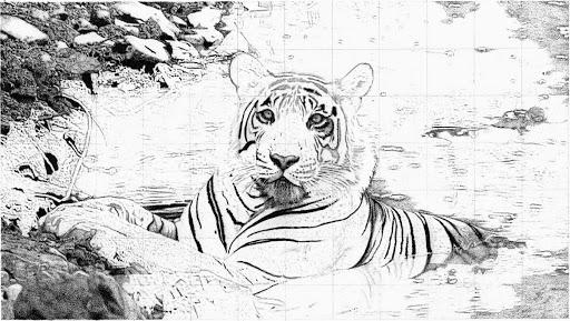 tigercopy-2015-02-13-18-32.jpg